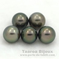 Lot of 5 Tahitian Pearls Semi-Round C from 9 to 9.3 mm