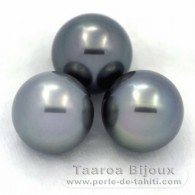 Lot of 3 Tahitian Pearls Round C from 13 to 13.1 mm