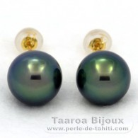 18K solid Gold Earrings and 2 Tahitian Pearls Round C+ 9.9 mm