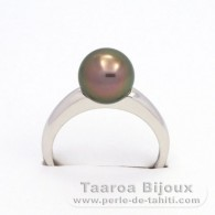 .925 Solid Silver + Rhodium Ring and 1 Tahitian Pearl Round B 9.1 mm