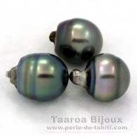 Lot of 3 Tahitian Pearls Ringed C from 11.9 to 12.2 mm