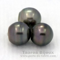 Lot of 3 Tahitian Pearls Ringed C from 12.3 to 12.7 mm