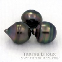 Lot of 3 Tahitian Pearls Ringed C from 12.3 to 12.4 mm
