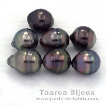 Lot of 7 Tahitian Pearls Ringed C from 8 to 8.3 mm