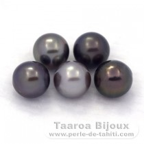 Lot of 5 Tahitian Pearls Round C from 8.7 to 8.9 mm