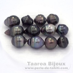 Lot of 12 Tahitian Pearls Ringed D from 9.5 to 9.9 mm