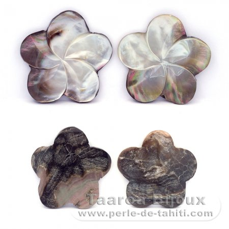 4 Tahitian mother-of-pearl shapes - 30 to 40 mm diameter