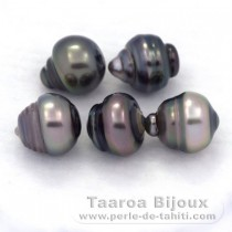 Lot of 5 Tahitian Pearls Ringed C from 9.5 to 9.9 mm