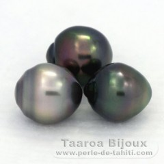 Lot of 3 Tahitian Pearls Ringed B from 11 to 11.3 mm