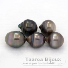 Lot of 5 Tahitian Pearls Ringed D from 9.5 to 9.9 mm