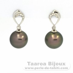 Rhodiated Sterling Silver Earrings and 2 Tahitian Pearls Round C 11 mm