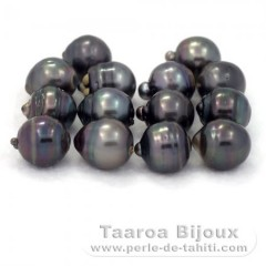 Lot of 14 Tahitian Pearls Ringed D from 12.5 à 12.9 mm